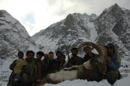 The Himalayan ibex, though not an expensive hunt, is considered one of the more difficult mountain species, hunted in few areas and always at high elevation in very tough country.  This is probably the largest-bodied of all the ibex, with very thick horns.