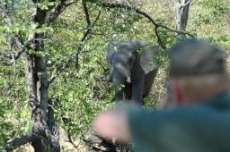 It is amazing how little cover is needed to hide an entire elephant